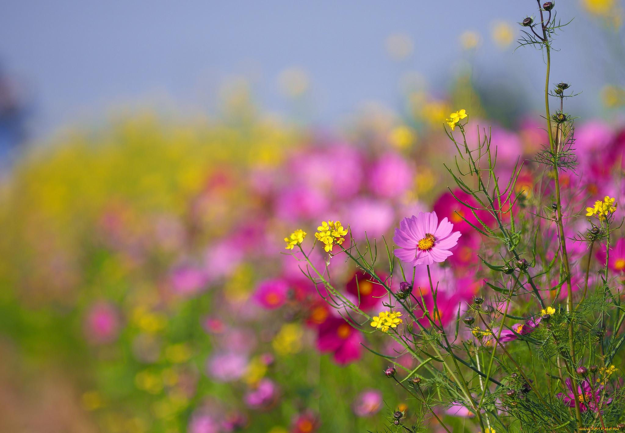миндалины может фото картинки полевые цветы летом комментариях, какая